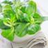 Feldsalat mit Mandeldressing